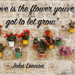 Love is the flower you've got to let grow. -John Lennon