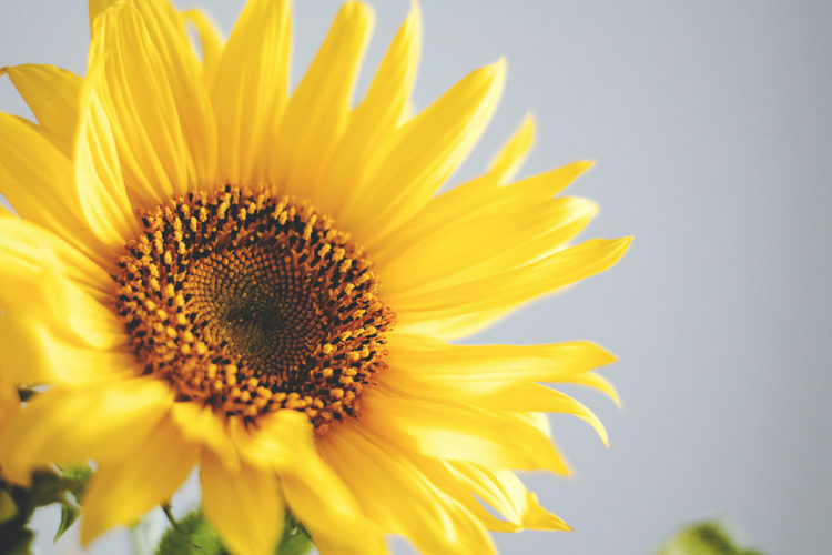What a sunflower can teach us in this time